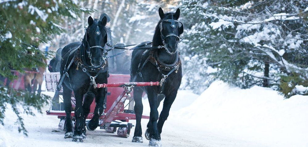 Sleigh Ride - The Key to a Perfect Winter Wedding - Blogue / Blog – Hôtels Gouverneur