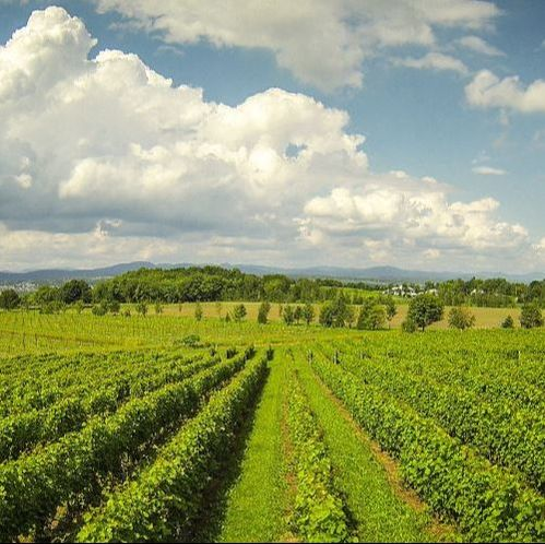 Amazing Activities You Must Do this Summer – Wine Route - Blogue / Blog – Hôtels Gouverneur